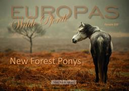 New Forest Ponys